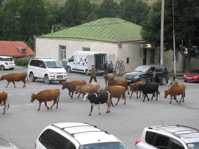Öncelik ineklerin