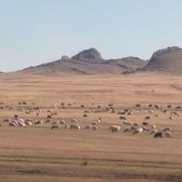Rusya - Moğolistan Sınırı 11/09/2014