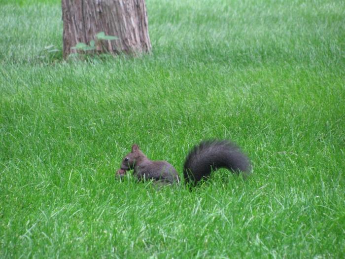 Parkta sincaplar dolaşıyor
