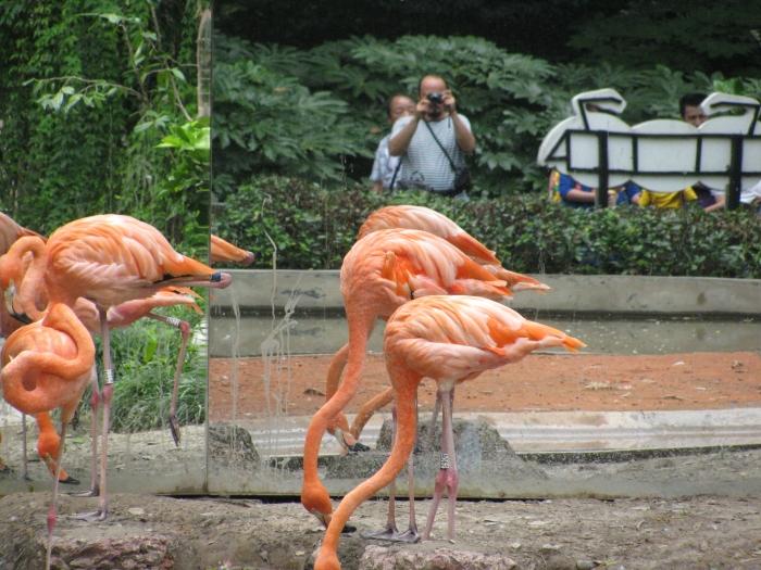 Flamingolar ve ben