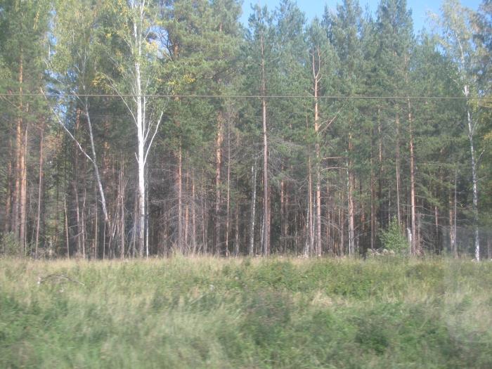 Sibirya'da ormanlık alan