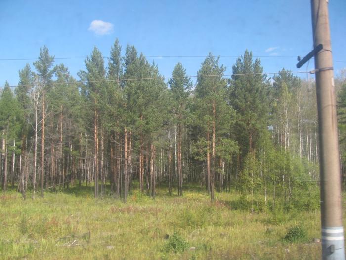 Yine ağaçlar ve direk