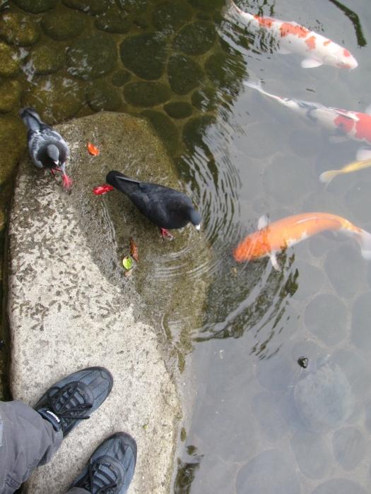 Balıklara yem atarken kuşlara yakalandık