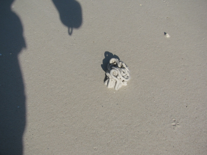 Kumsalda bu garip şeylerden var. Meğer içinde kurt varmış
