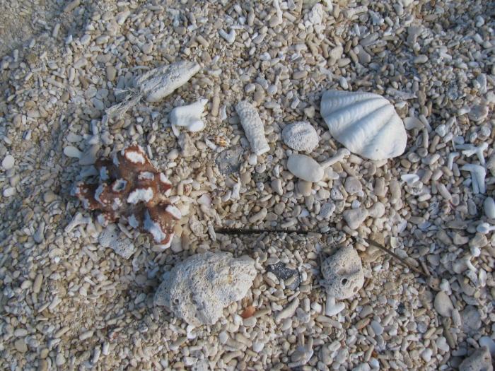 Plajda her yer deniz kabuğu