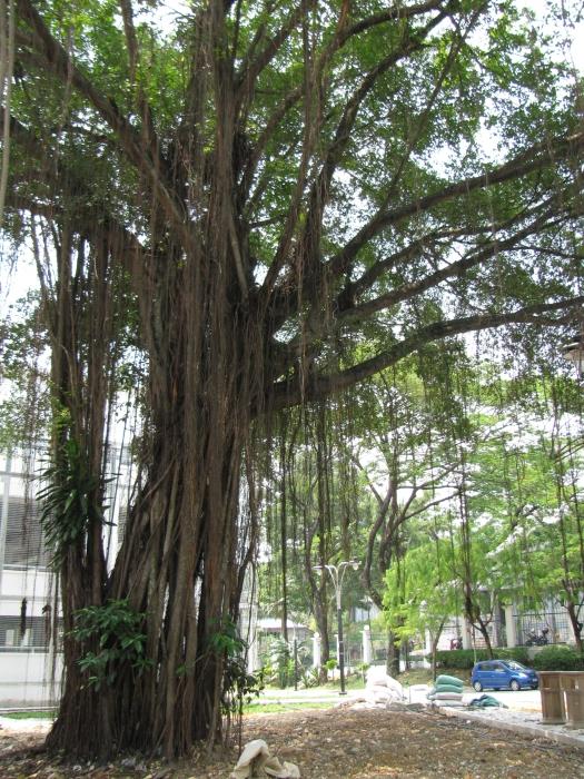Değişik bir ağaç