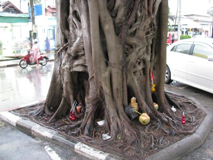 Ağacın dibindekiler çöp değil  tanrılarına ikram