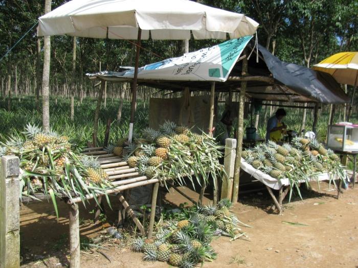 Ananas tezgahları