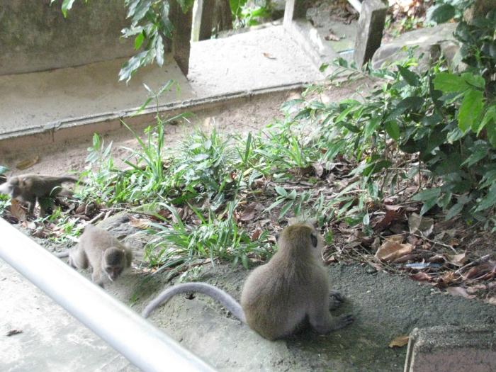 Serseri maymunlar