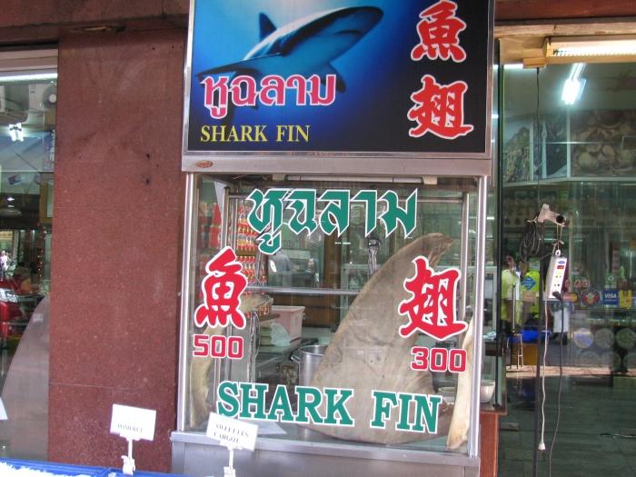 Köpek balığı yüzgeci