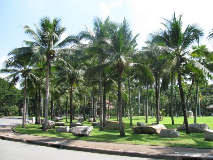 Lumphini parkı