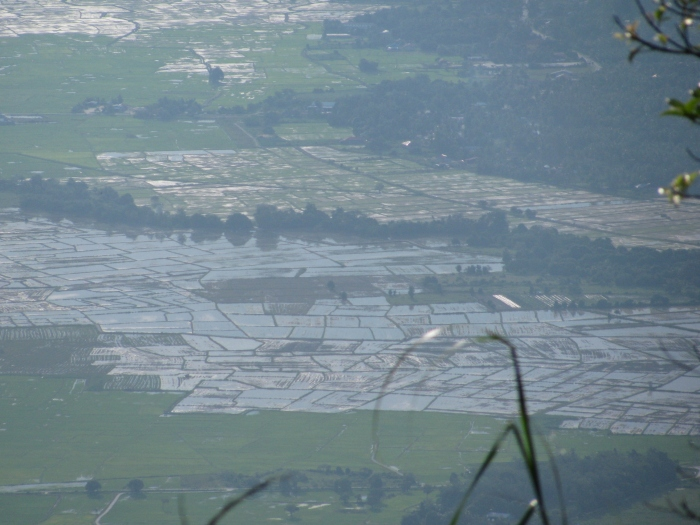 Raya Dağından pirinç tarlaları