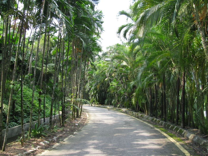 Malezya Kuala Lumpur'da yürüyüş yolu