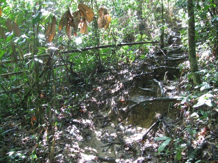 Tayland Phuket adasında yağmur ormanlarında yürüyüş yolu