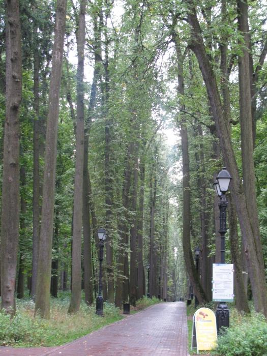 Rusya Moskova'da yürüyüş yolu
